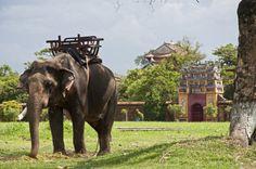 Elefantenreiten Vietnam