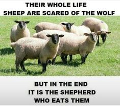 Their whole life sheep are scared of the wolf but in the end it is the shepherd who eats them. Funny Quotes, Life Quotes, Funny Memes, Jokes About Men, Actions Speak Louder Than Words, The Shepherd, Twisted Humor, Best Funny Pictures, Funny Pics