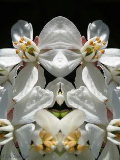 le rondouillet innommés fleur flower nature plante botanique blanc créature étrange masque composition portrait visage fantastique surnaturel personnage imaginaire jardin apparition mystérieux caricature humour