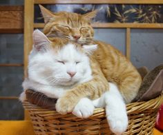😺😺 The Cutest Couple! 😺 Here's a High Paw to their Happiness Forever! I Love Cats, Crazy Cats, Cute Cats, Funny Cats, Kittens Cutest, Cats And Kittens, Kittens Meowing, Cute Baby Animals, Funny Animals