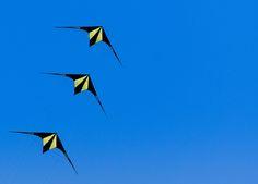 Up - Kites