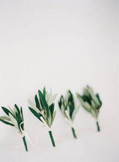 Sage leaf olive branch groom boutonneire