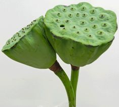 Lotus Pods | Wiffens Premium Green Grocers