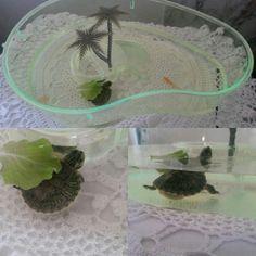 Dino! Il tartarughino!
