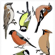 1 million+ Stunning Free Images to Use Anywhere Tin Can Crafts, Bird Crafts, Animals Name In English, Stained Glass Patterns Free, Animal Templates, Free To Use Images, Bird Theme, Felt Birds, Summer Art