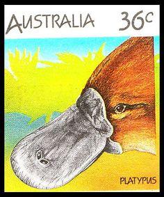 platypus 1