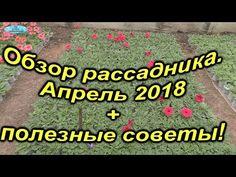 (165) Обзор рассадника + полезные советы! - YouTube