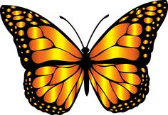 Find images of Monarch Butterfly. Monarch Butterfly Images, Butterfly Outline, Butterfly Clip Art, Butterfly Drawing, Orange Butterfly, Butterfly Pictures, Butterfly Fairy, Butterfly Painting, Butterfly Wallpaper