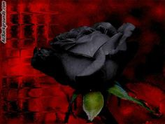 Black roses are best.