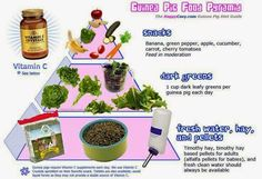 Image result for guinea pig fruit and veg list