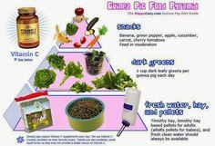 Image result for guinea pig fruit and veg list