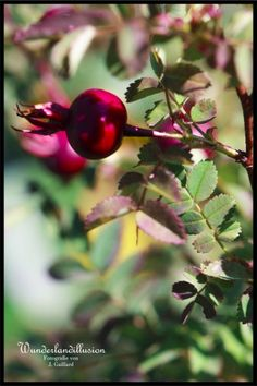 #rot #wunderlandillusion #stilleben #natur