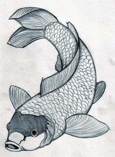 koi fish drawings in pencil Japanese Koi Fish Tattoo, Koi Fish Drawing, Fish Drawings, Pencil Drawings, Art Drawings, Koi Art, Fish Art, Japanese Drawings, Japanese Art