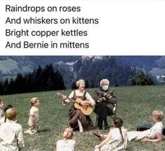 Best Memes, Funny Memes, Hilarious, Dog Memes, Stupid Funny, Bernie Sanders, Bernie Memes, Whiskers On Kittens, Sound Of Music
