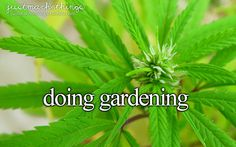 Doing #Gardening | Photo by: Flores y Plantas