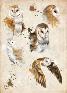 Owls sketches by BarkingSpiders.deviantart.com on @deviantART