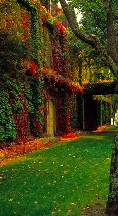 Autumn color on the wall • photo: Robert Torkomian on FineArtAmerica