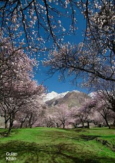 Awesome view of Blossomy Shadows Hunza valley Gilgit Baltistan Pakistan