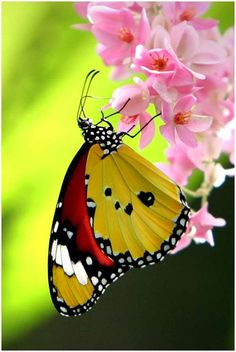 Colorful Butterfly on Pretty Pink Flower