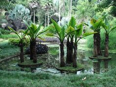 Roberto Burle Marx. He is accredited with having introduced modernist landscape architecture to Brazil. He was known as a modern nature artist and a public urban space designer. His work had a great influence on tropical garden design in the 20th century. Water gardens were a popular theme in his work.