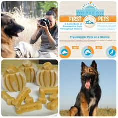 Tips on How to Photograph Your Dog, Presidential Pets, Pumpkin Please Pupsicles from @Kirby the Dorkie and the Belgian Tervuren all graced the BBS Blog this week! Read to find out more! #bbs #weekendreader #mustread