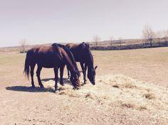 #horses#nature#:)#<3#Hungary#braun