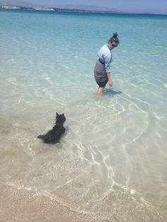 Scottish Terrier Matico: Beach and swim time!