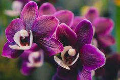 Orchid Photo no6 Nature Photography Exotic Flowers Orchid Home Decor Wall Art Purple Flower Landscape Photography Orchid Photography