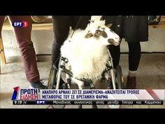 Ανάπηρο αρνάκι ζει σε διαμέρισμα στο Ηράκλειο Κρήτης! (ΕΡΤ1, 20/3/18)