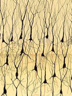 Golgi stain to see neurons