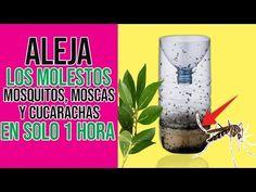 Mezcla estos Ingredientes y en solo minutos no Veras mas Los Mosquitos, Moscas y Cucarachas en casa - YouTube Garden Pests, Diy Garden Decor, Beautiful Flowers, Projects To Try, Lily, Veneno, Videos, Youtube, Environment