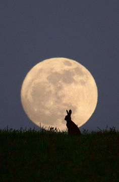 Moongazer by Steve Adams on 500px i think that is spost to be a werewolf not a bunny rabbit.