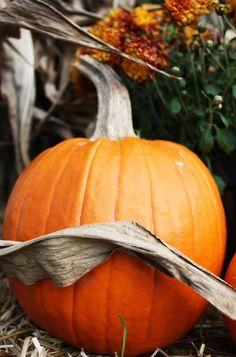corn, mums, pumpkin