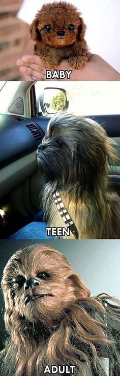 45 Ideas funny memes lol hilarious star wars for 2019 Star Wars Witze, Star Wars Jokes, Animal Memes, Funny Animals, Cute Animals, Baby Animals, Chewbacca, Star Wars Poster, Love Stars