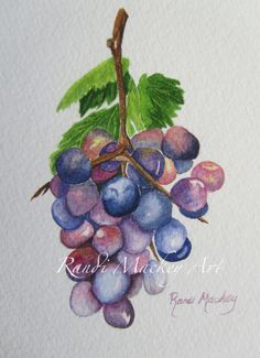 Original Watercolor by me, RandiMackeyArt, of Purple grapes in various stages of maturity.