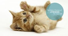 So how do you find the best litter box for your cat's and you needs. - See more at: https://gearforpets.com/blog/everything-need-to-know-about-cat-litter-boxes#sthash.0qJj4iah.dpuf