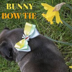 Are You ready for the Easter Egg Bow hunt? Our new Easter Range has everything you need to get in to the spring spirit and celebrate easter in style!  The Easter Bunny Bow Tie is created from Luxurious fresh spring colours that makes this bow tie resemble beautiful spring flowers finished off with an eye catching bunny centre piece Which makes this high quality bow tie simply eggcellent! Created lovingly for Your beloved pet to look stylish and stand out at this Easter holidays! Luxury Bow…