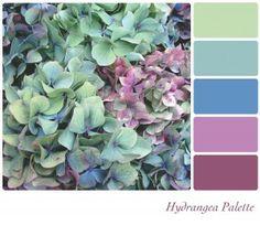 bigstock-Hydrangea-flower-background-co-36404923