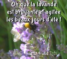 Oh que la lavande est bruyante et agitéeles beaux jours d'été ! alixhg- haiku du 8 juillet 2015