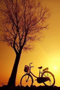 Bicycle and Tree Silhouette in the Sunset Sunrise Wallpaper, Nature Wallpaper, Sunset Silhouette, Tree Silhouette, Silhouette Photography, Bicycle Art, Bike, Mellow Yellow, Yellow Sun