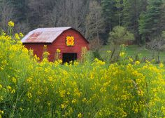 In Burnsville, NC. Love this old red barn, the quilt square and the yellow flowers.