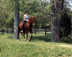 7 things to teach your trail horse. Make the most of your trail outing this season by revisiting a few basic training exercises now. Western Riding, Trail Riding, Horses And Dogs, Show Horses, Horse Exercises, Training Exercises, Training Tips, Horse Riding Tips, Horse Tips