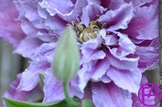 Makro-Blüte | FeenArt | Claudia Böttcher | DSC_6097FAFGk