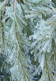 Susan Tuttle Photography -- Maine ice storm