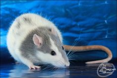 Rats, It's Monday! Here's another keen shot from Katheleen L