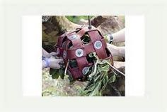 Fire Hose Animal Enrichment - Bing Images