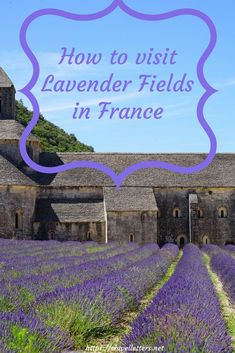 Dreaming of visiting lavenders fields in France? Find out the best time and best villages to visit #france #lavenderfields #provence #valensole