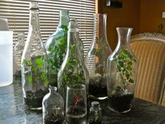 Making a terrarium using recycled bottles