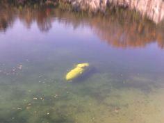 Underwater at the quarry