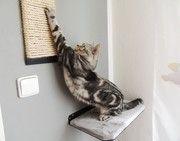 Merlin a škrábadlo. Merlin, Cats, Gatos, Cat, Kitty, Kitty Cats